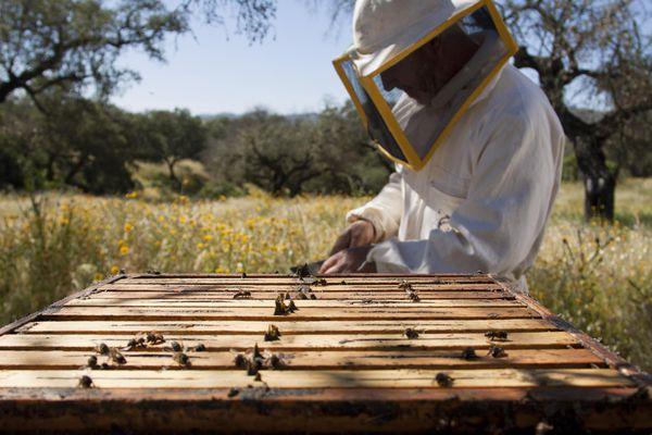 Beekeeper and honeycombs