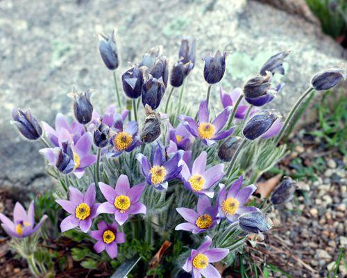 Imagen de flor de Pascua