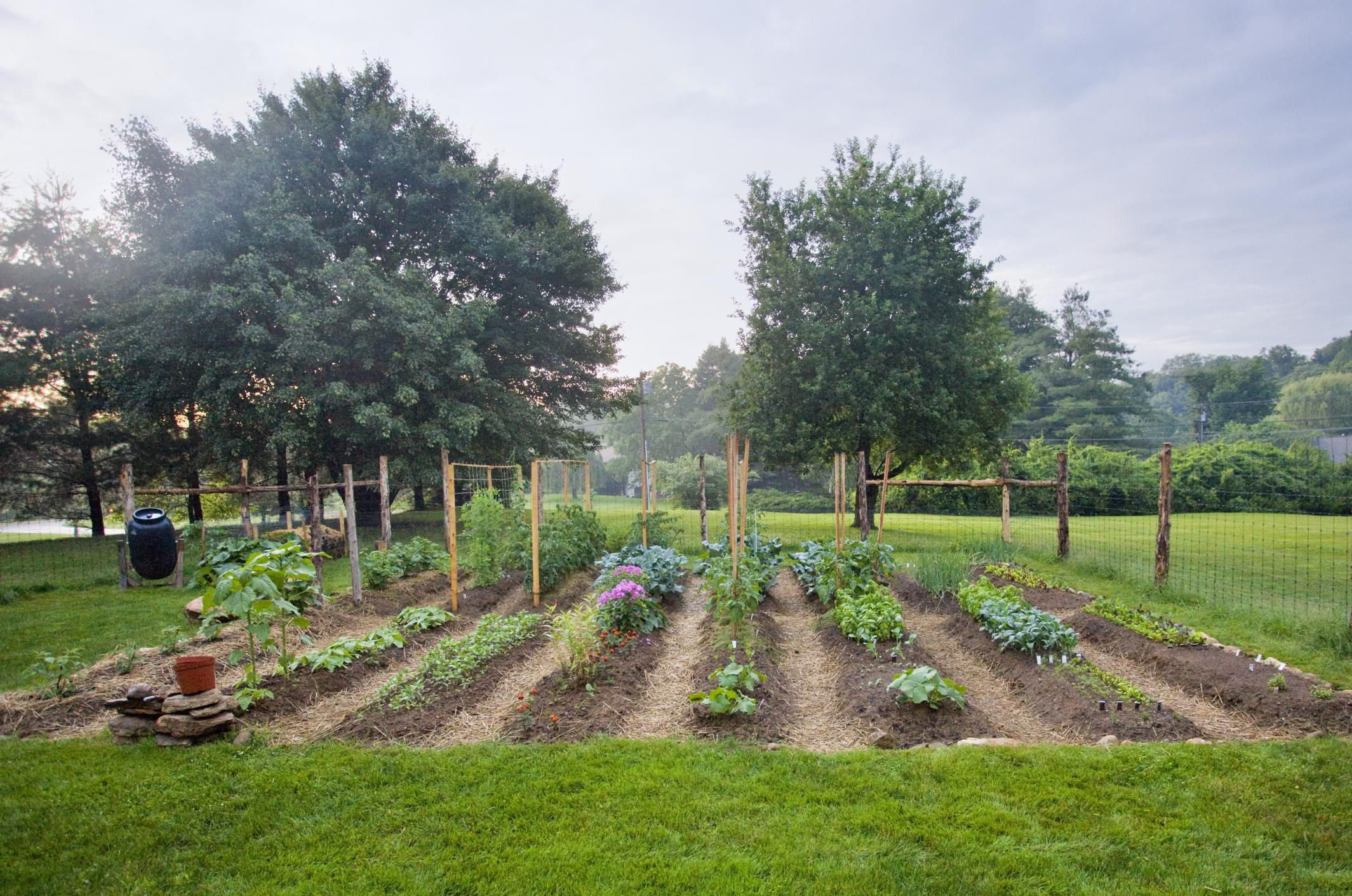 Planning and Starting a Vegetable Garden