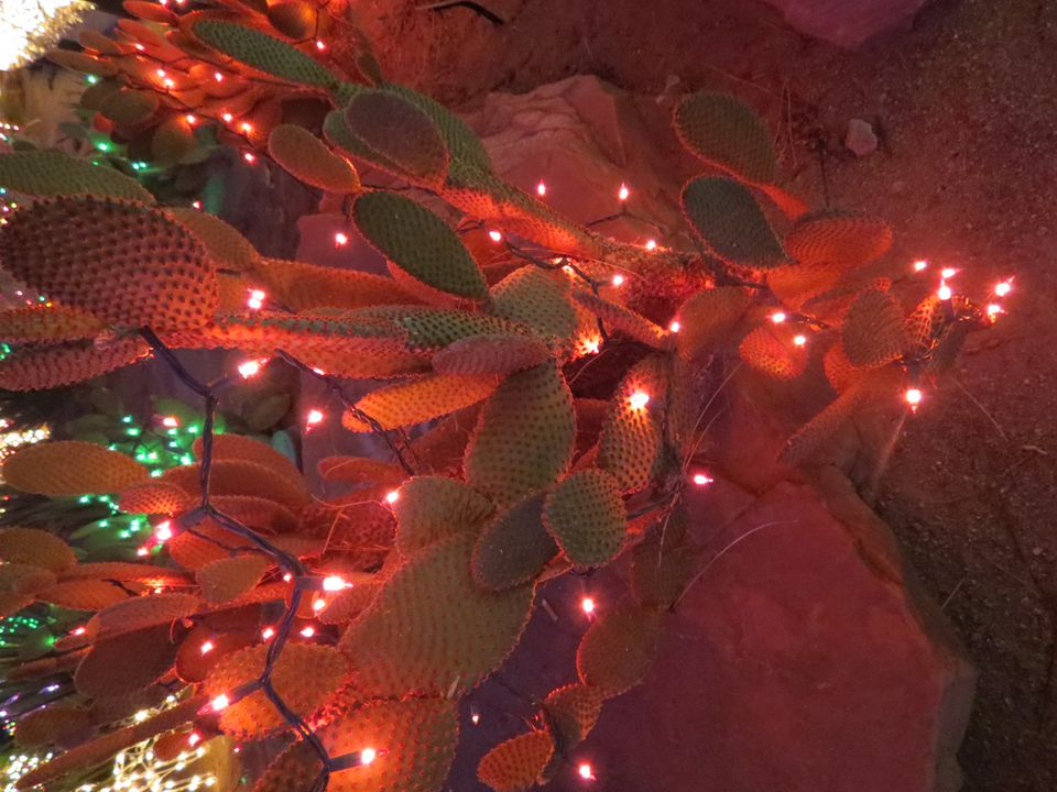 A Christmas Light Covered Cactus