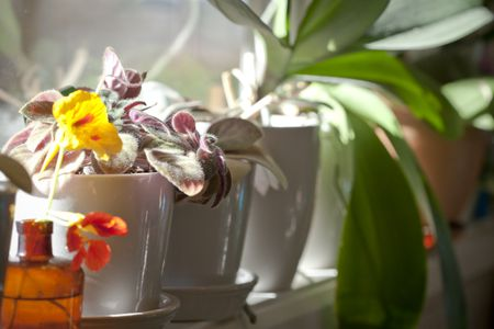 Top 8 Easy-Care Flowering Houseplants