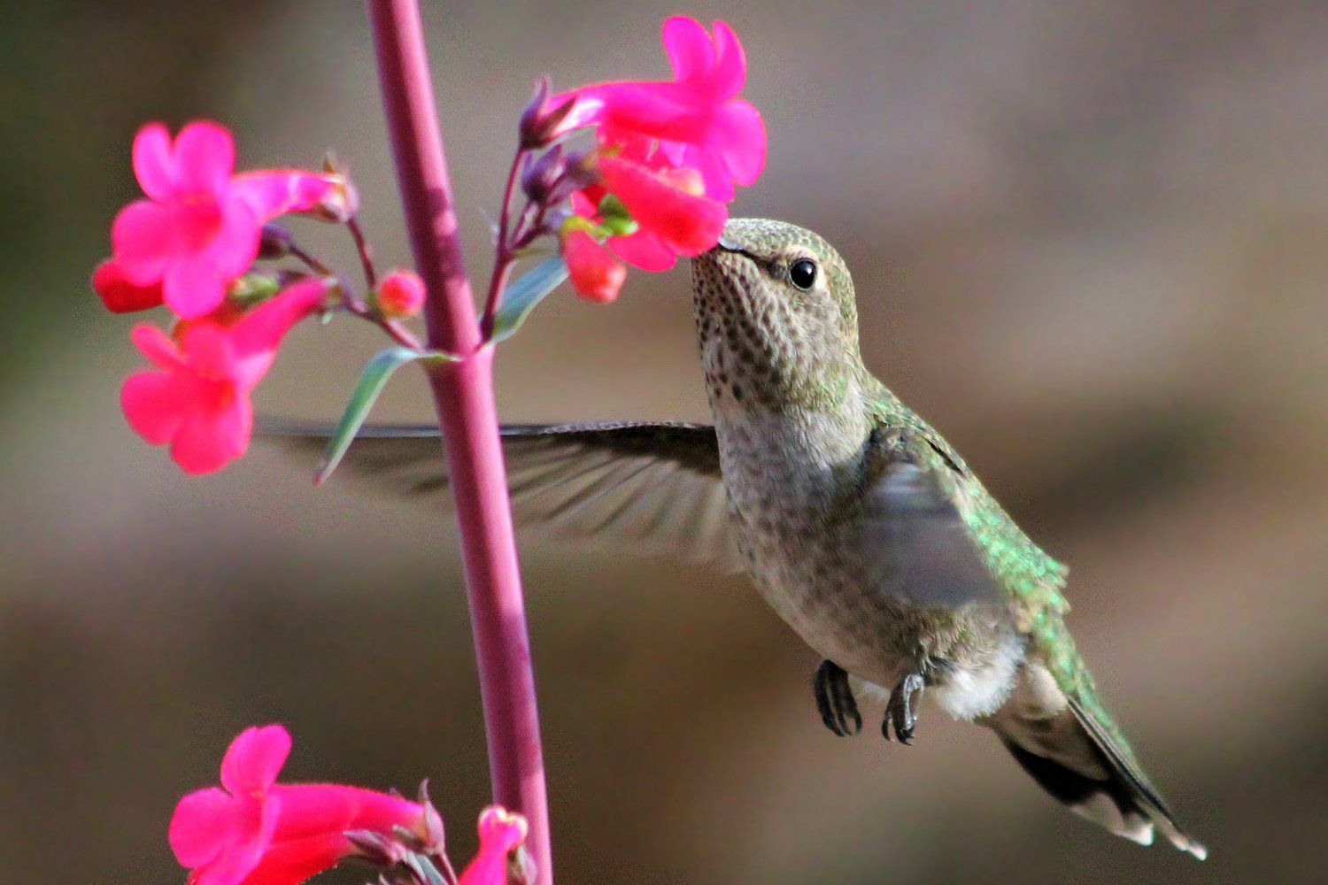 12 Birds You Want in Your Yard