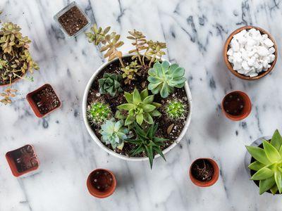 succulent container garden overhead shot
