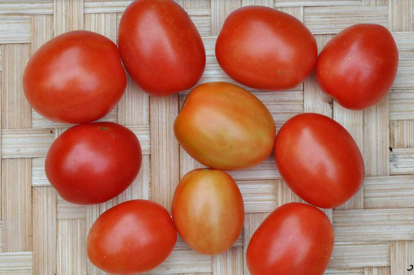 Close-up of some Principe Borghese tomatoes