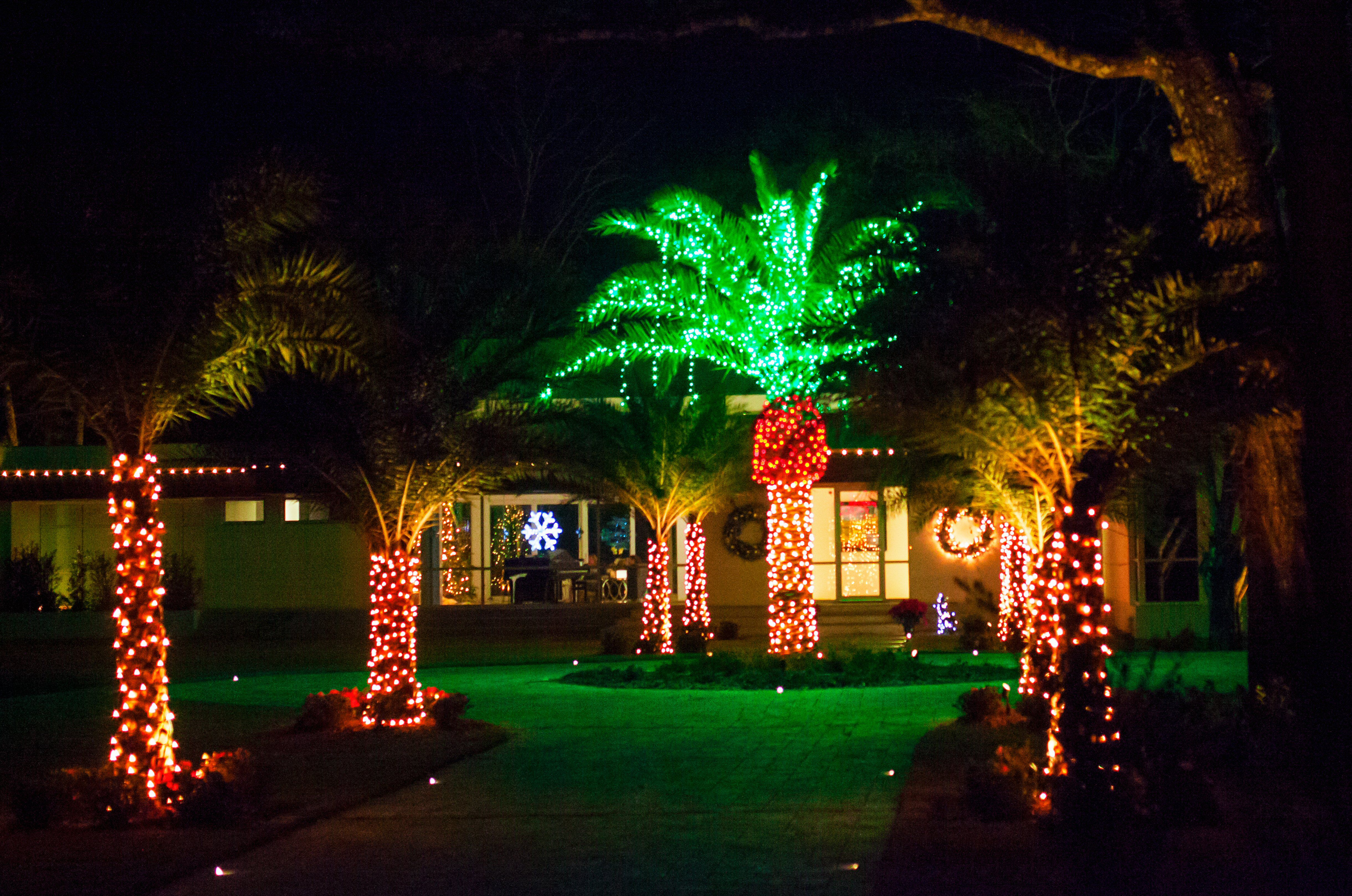 holiday lighted trees, including green palms, in the front of a Florida house