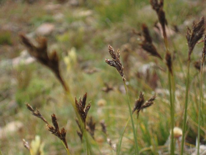 Delicate grass with brown seed heads.