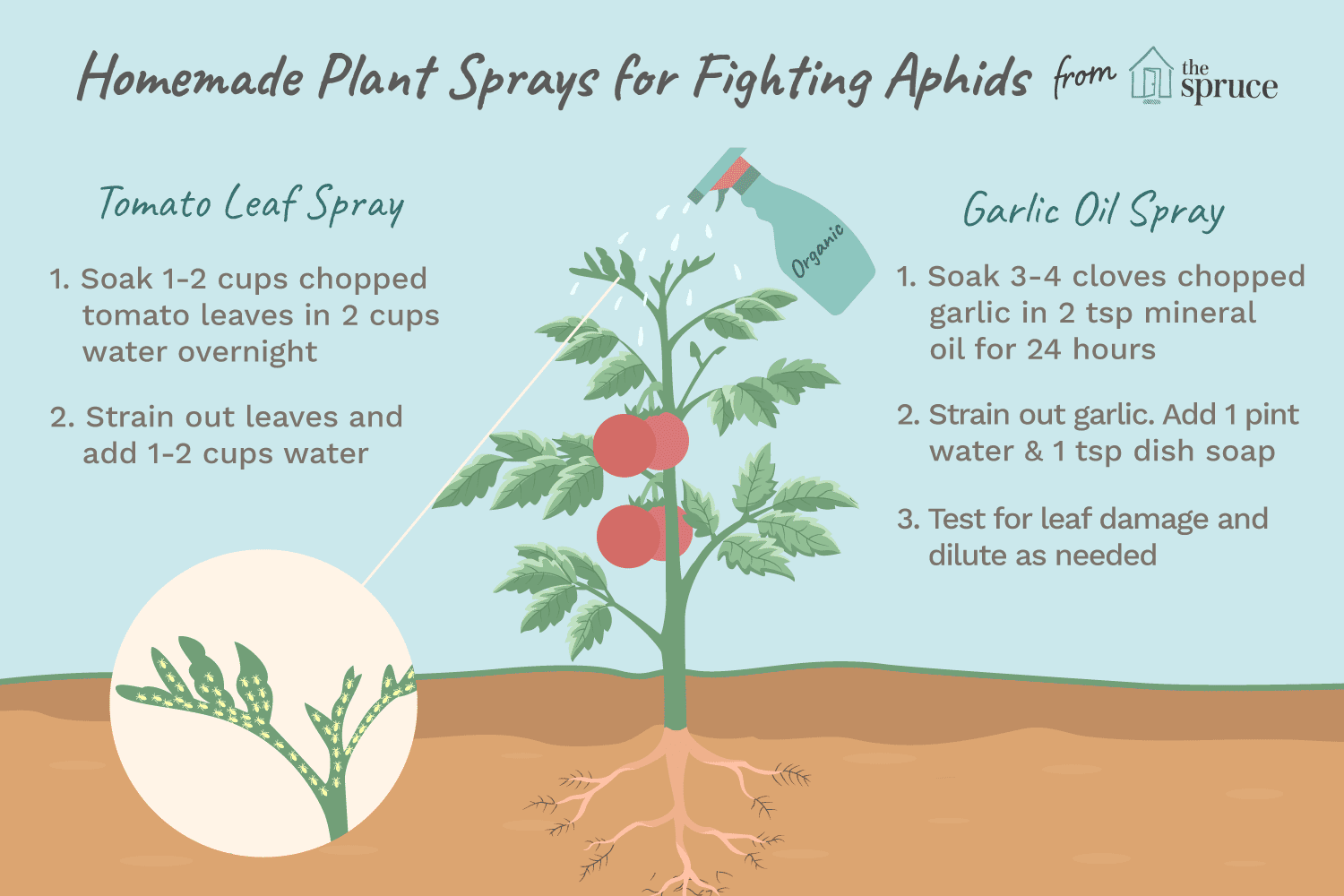 Homemade Organic Sprays for Fighting Aphids