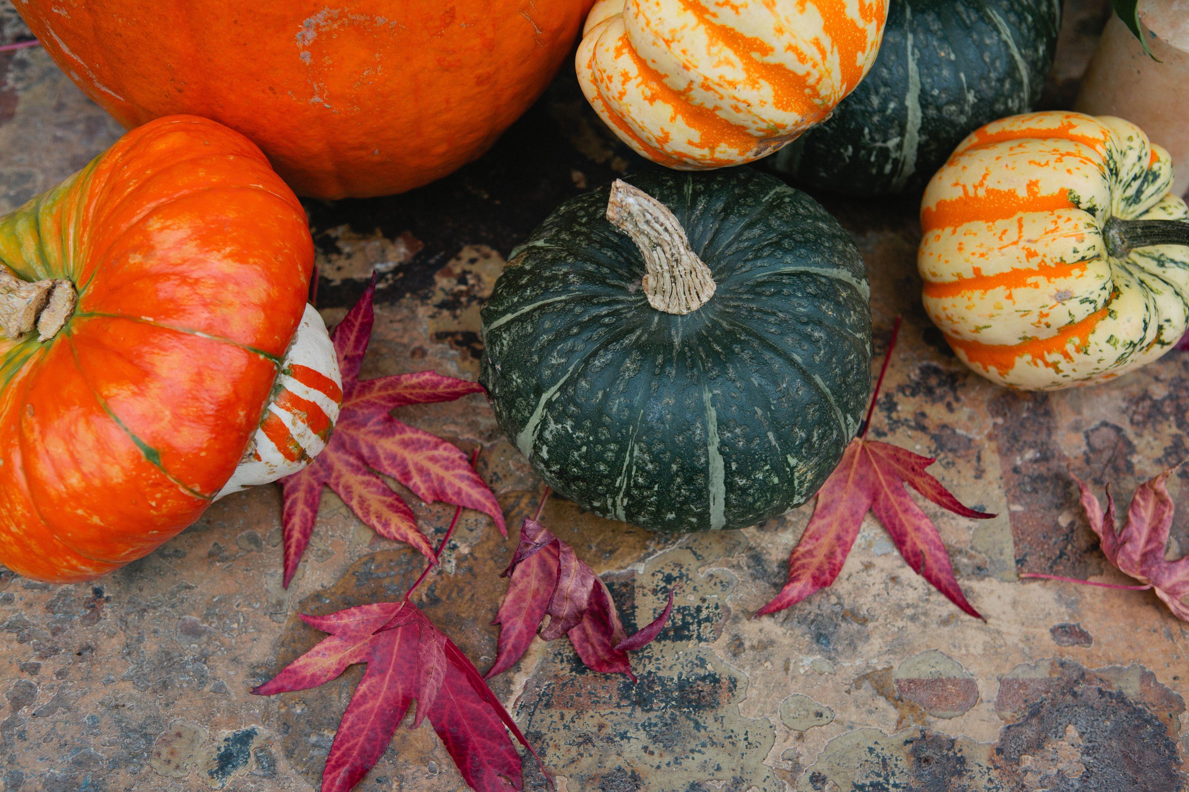 calabazas y calabazas de otoño,con hojas de árbol acer