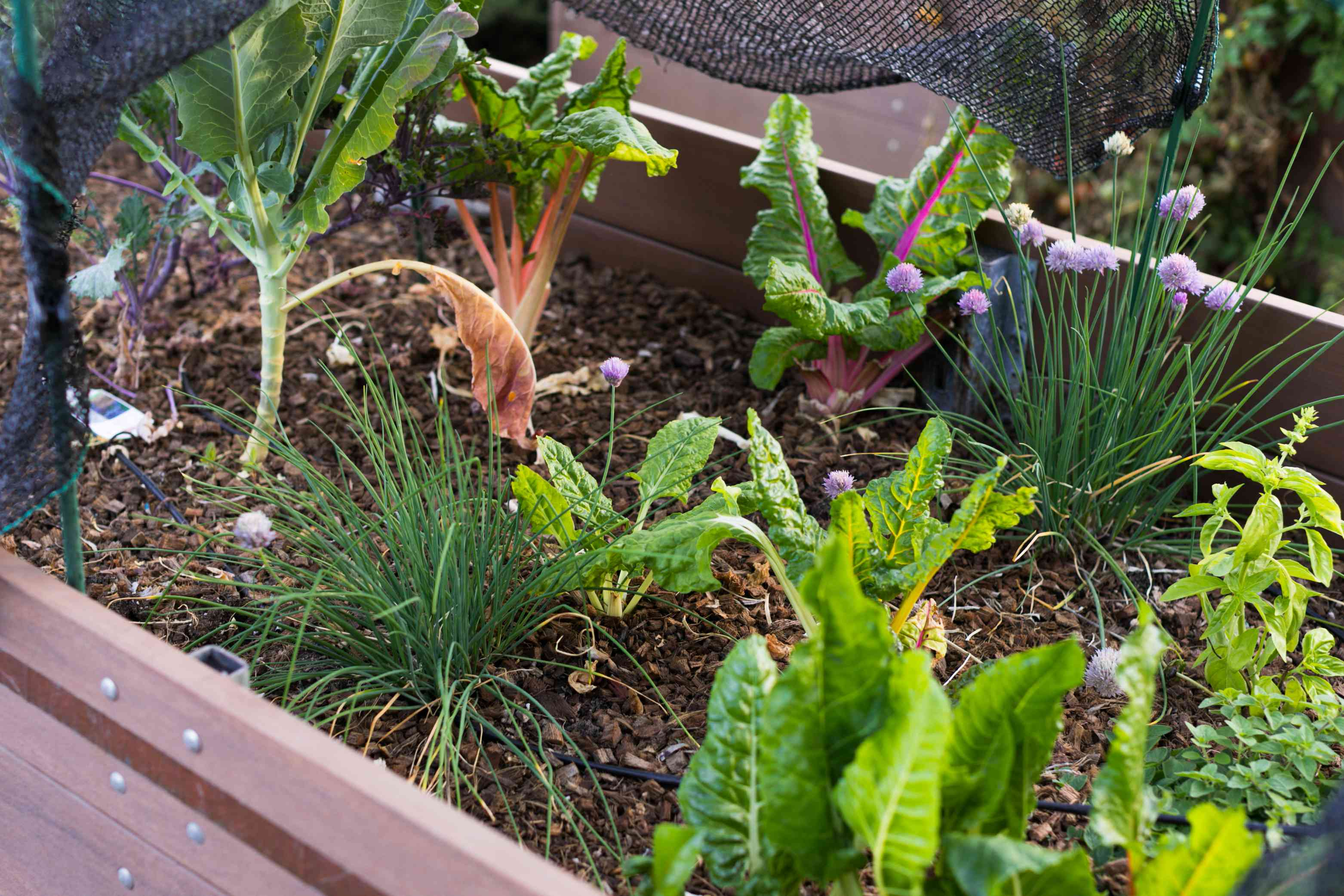 Eclectic vegetable garden planting designed with companion plants