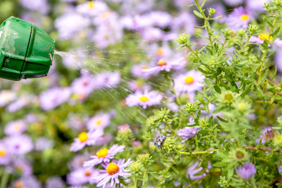 spraying neem oil on plants