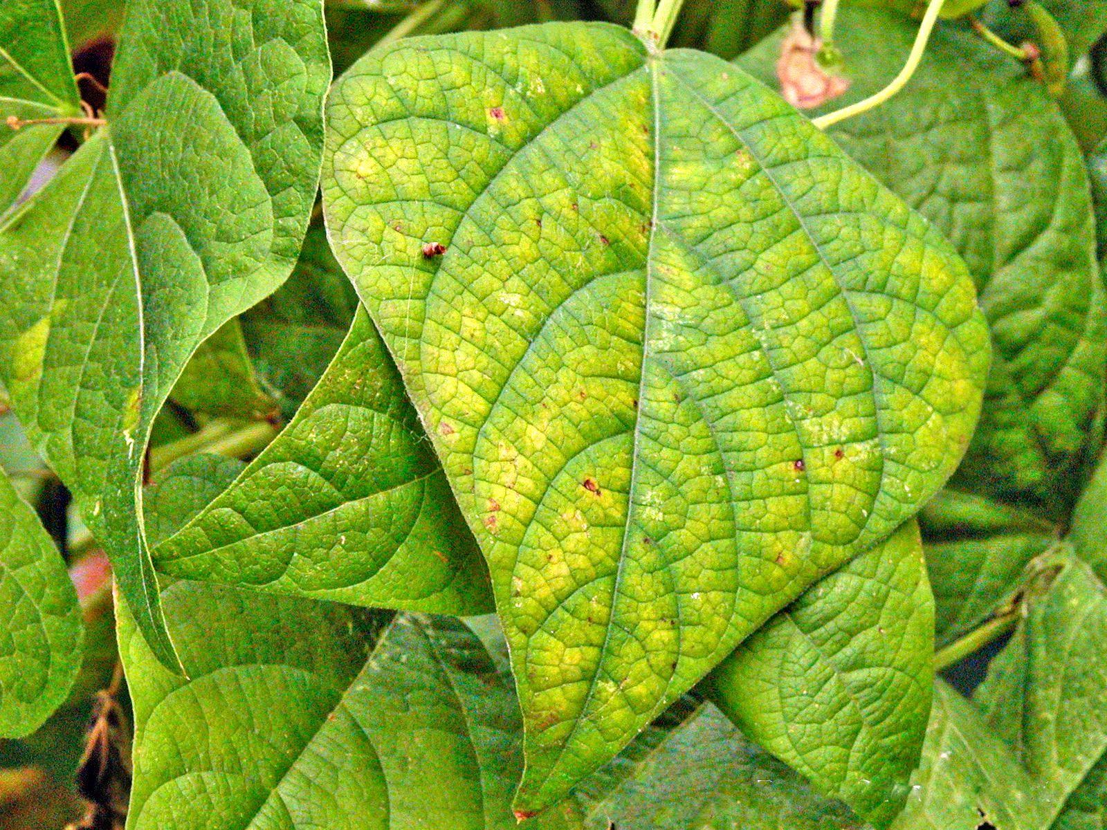 Identifying Plant Nutrient Deficiencies