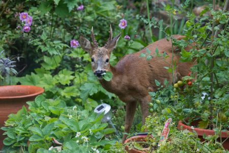 keep deer out of your yard and garden - Yard And Garden