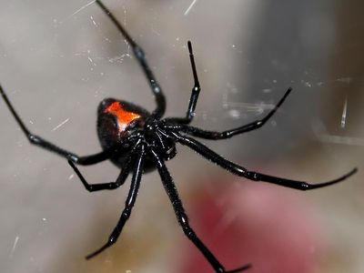 Control Spiders in the Home