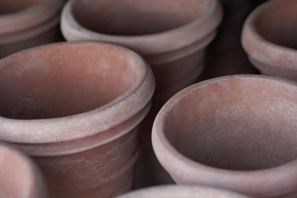 Close-up of flower pots