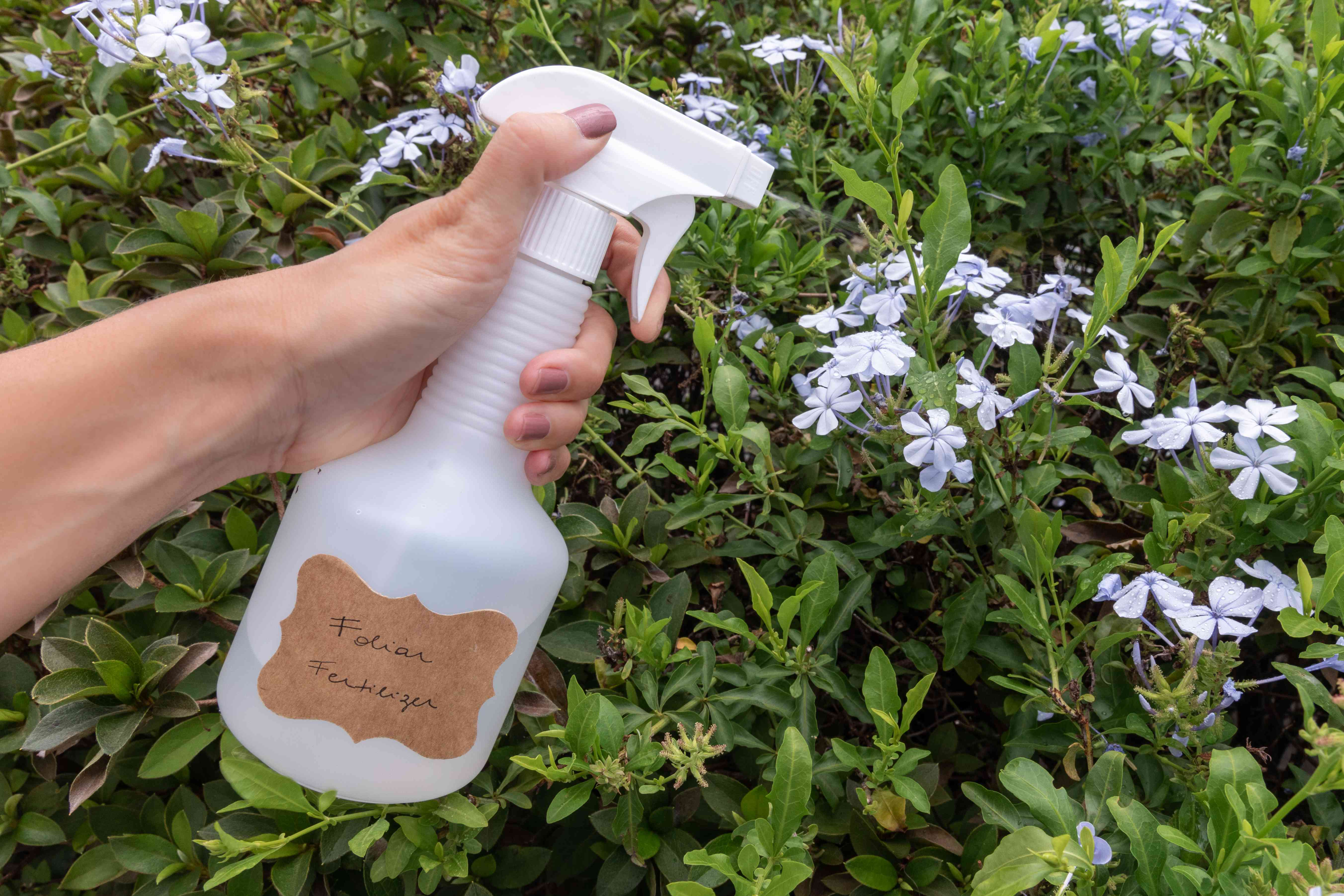 spraying on foliar fertilizer