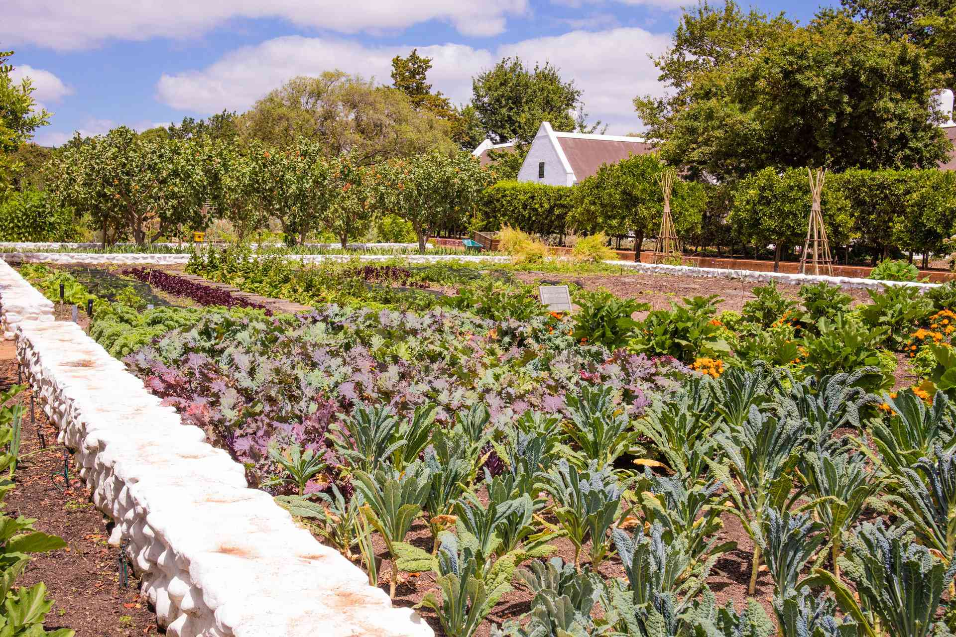 Large vegetable plot with a low retaining wall around it