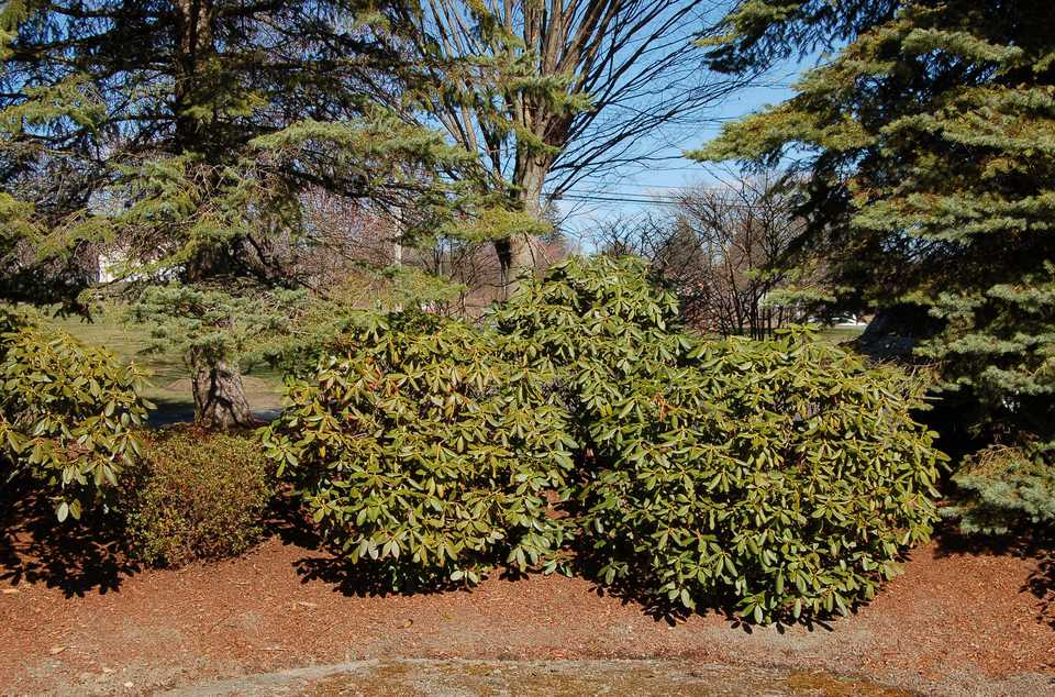 Berm planted with evergreen shrubs.
