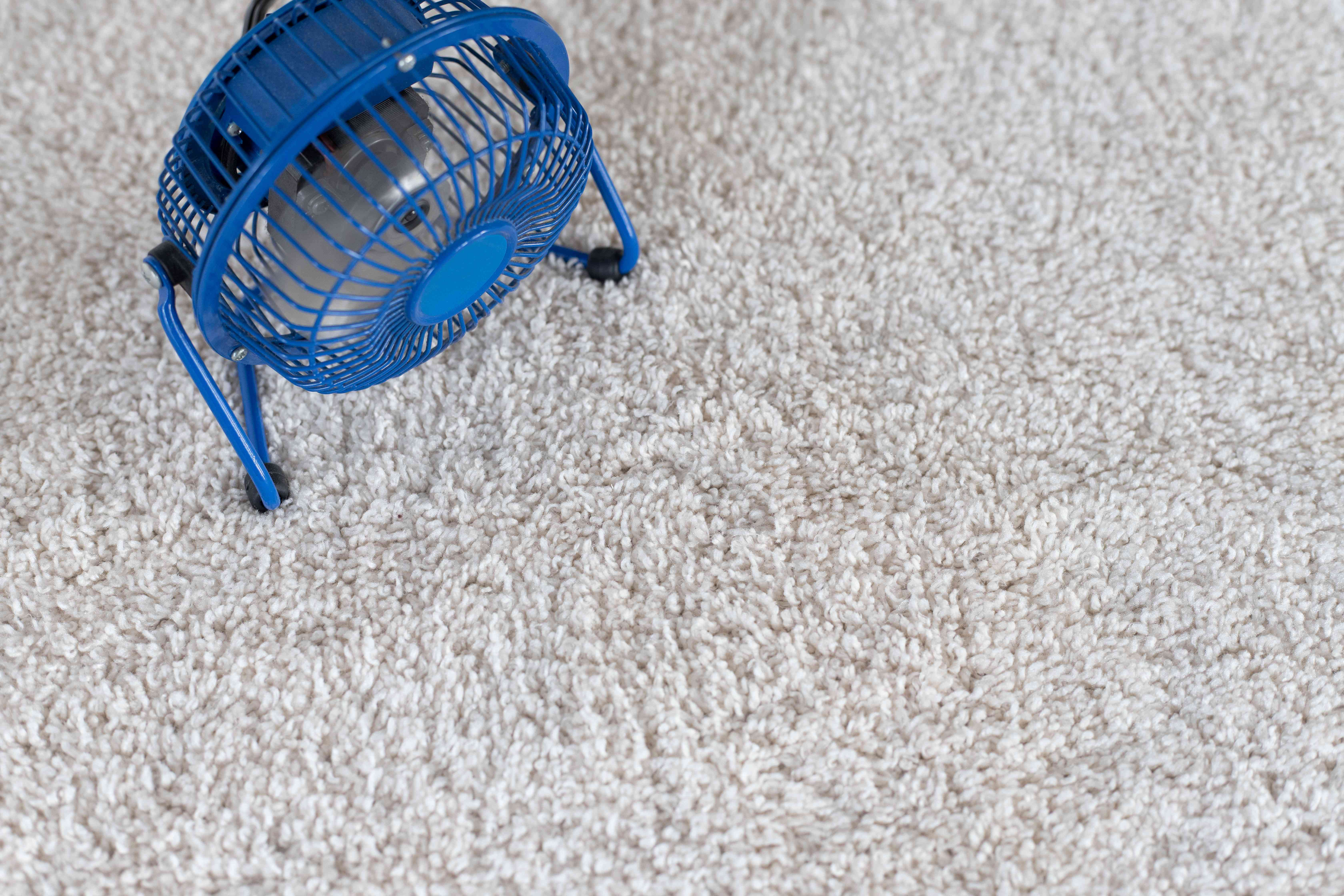 Small blue fan air drying carpet after cleaning from skunk odor