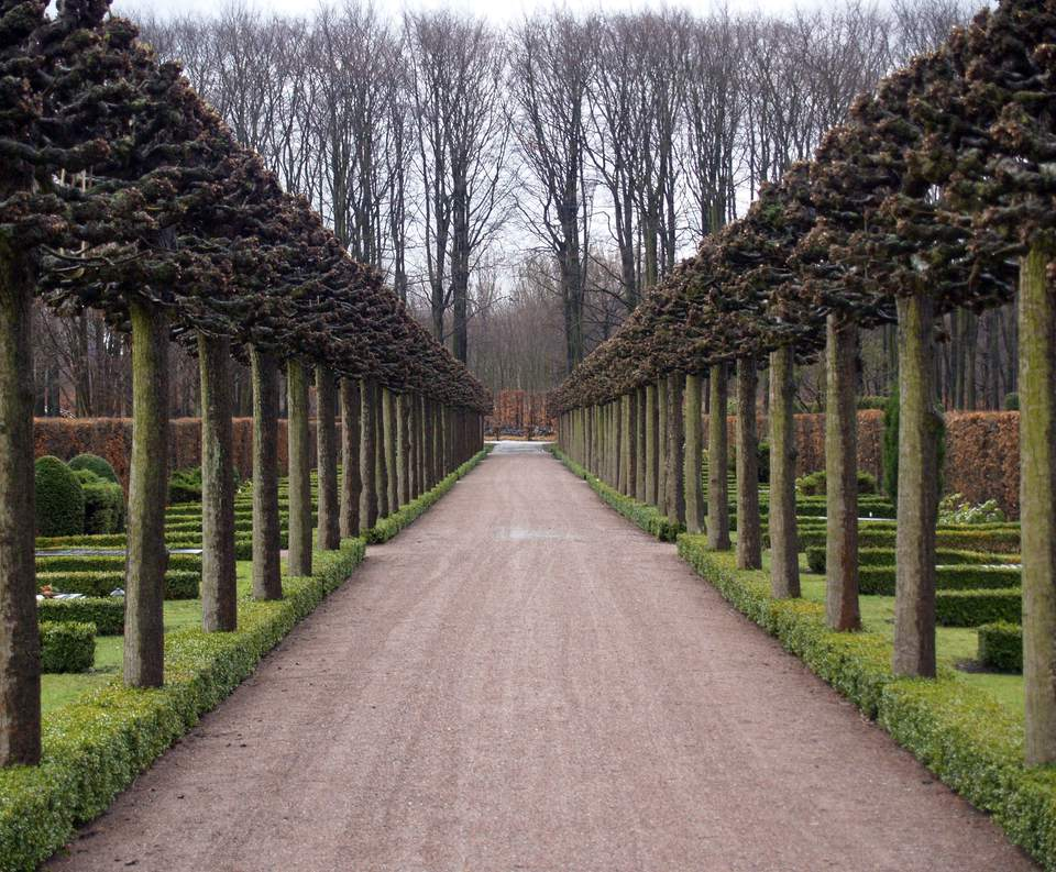 colonnade of trees, eastern cemetery, Malmö