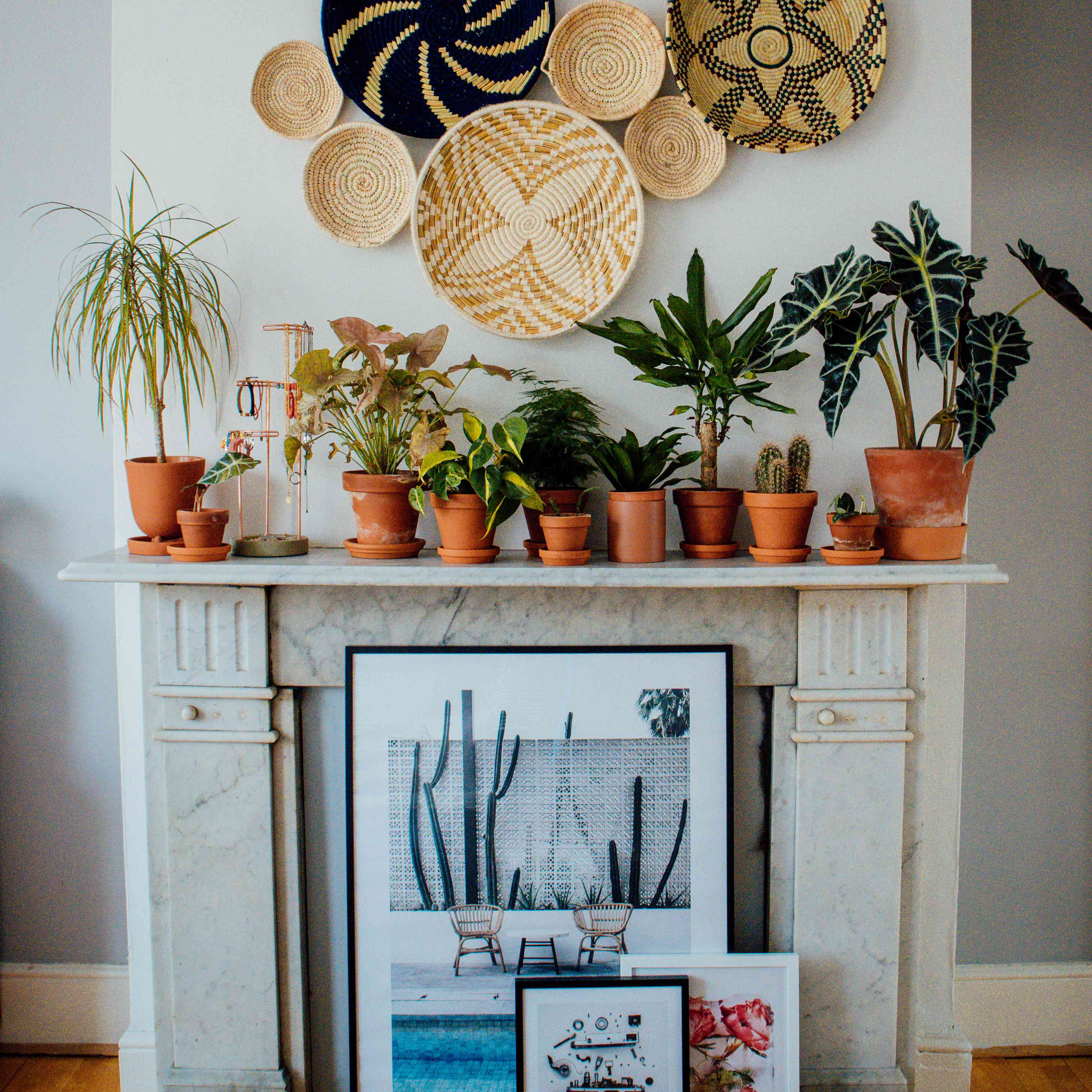 taylor fuller's mantle with plants and decor, plant shelfie