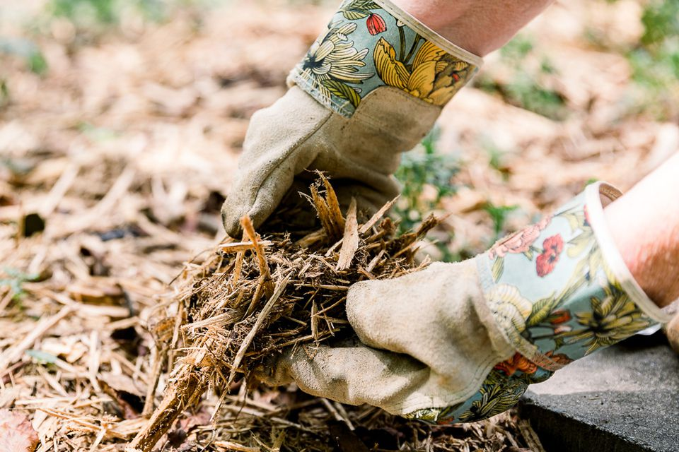 gardener holding mulch