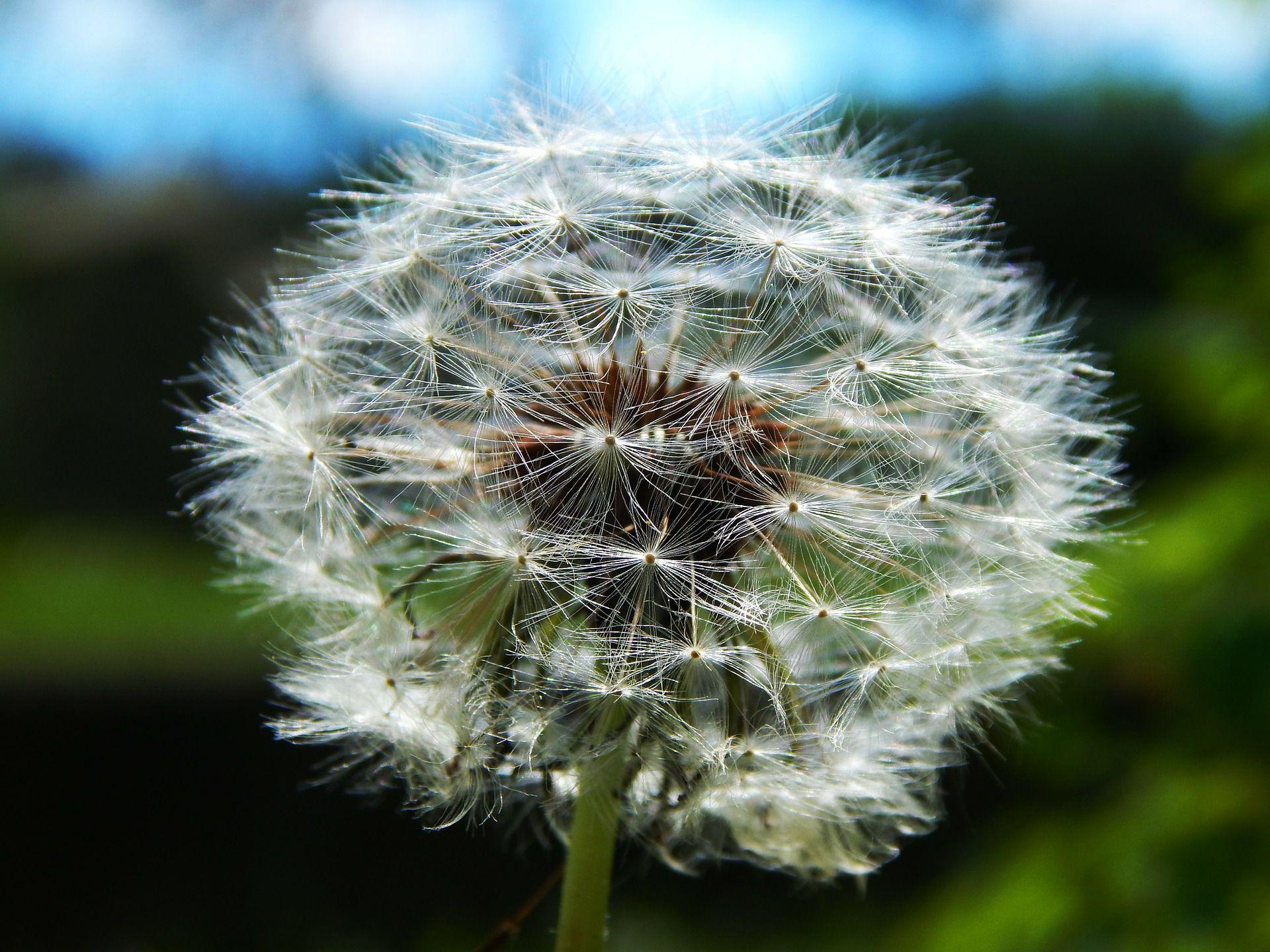 Photo gallery of common types of weeds izmirmasajfo