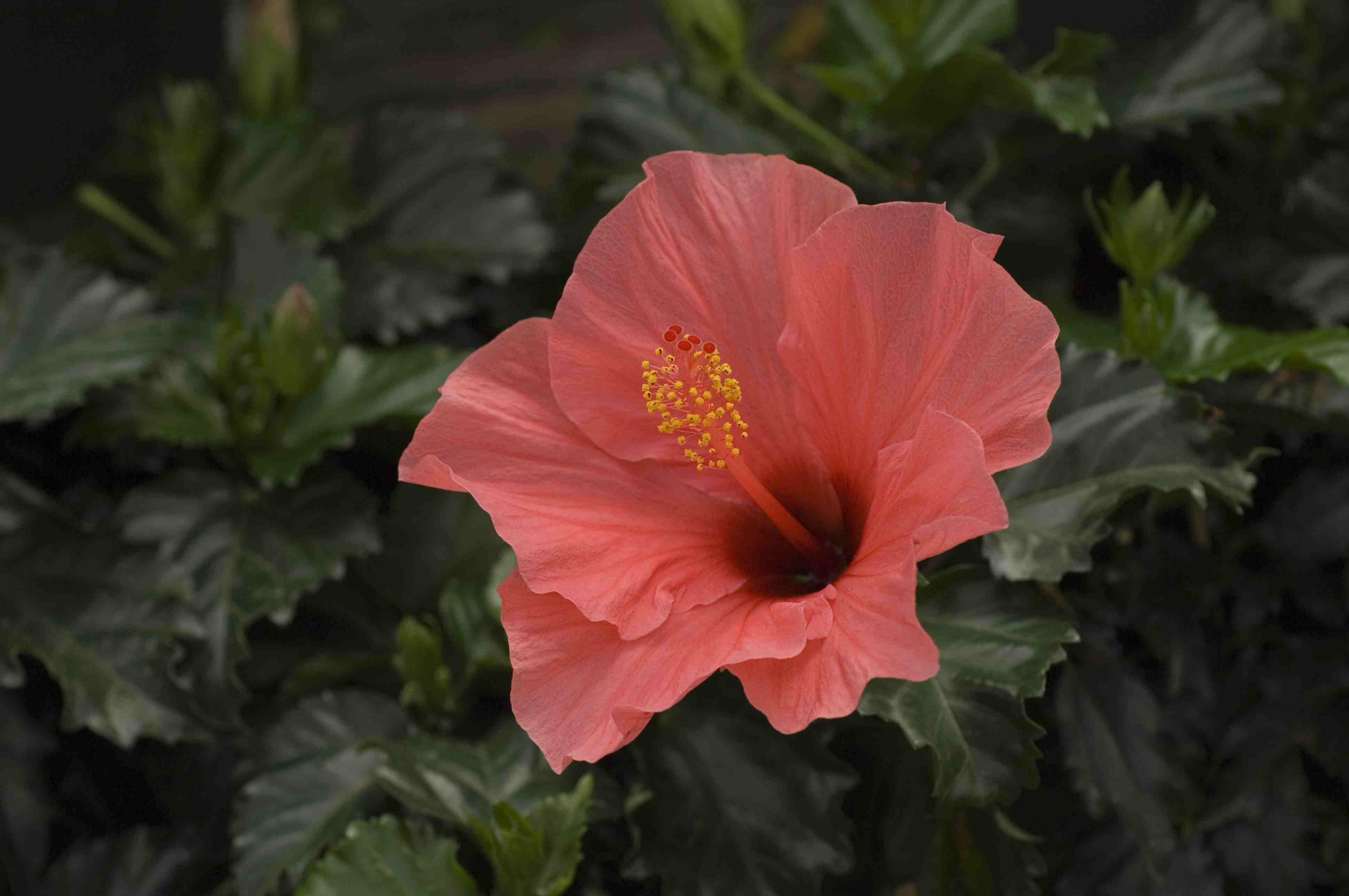 9 flowering houseplants izmirmasajfo