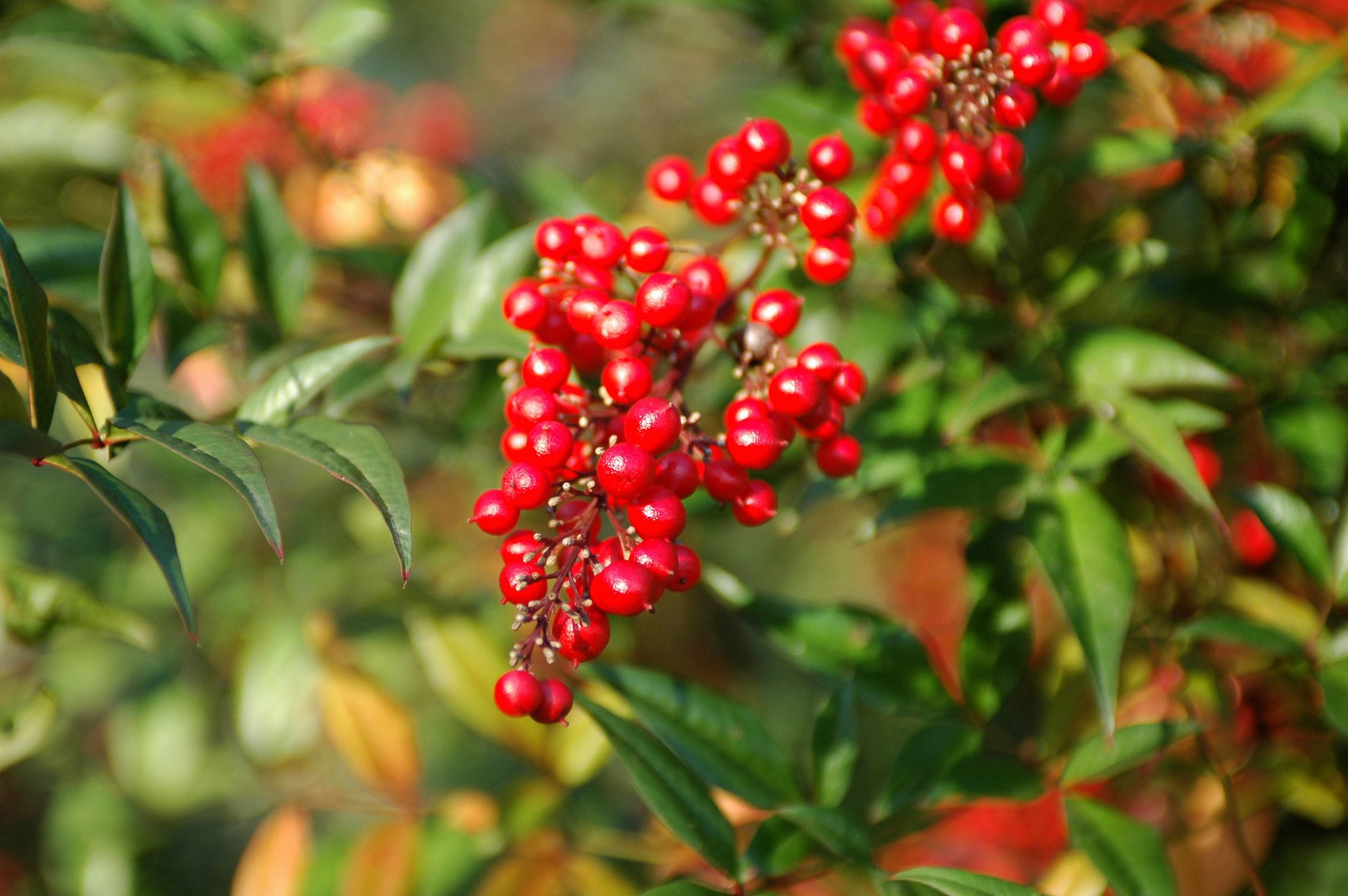 The Most Popular Drought Tolerant Shrubs