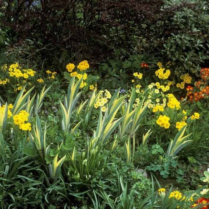 Yellow Spring Garden