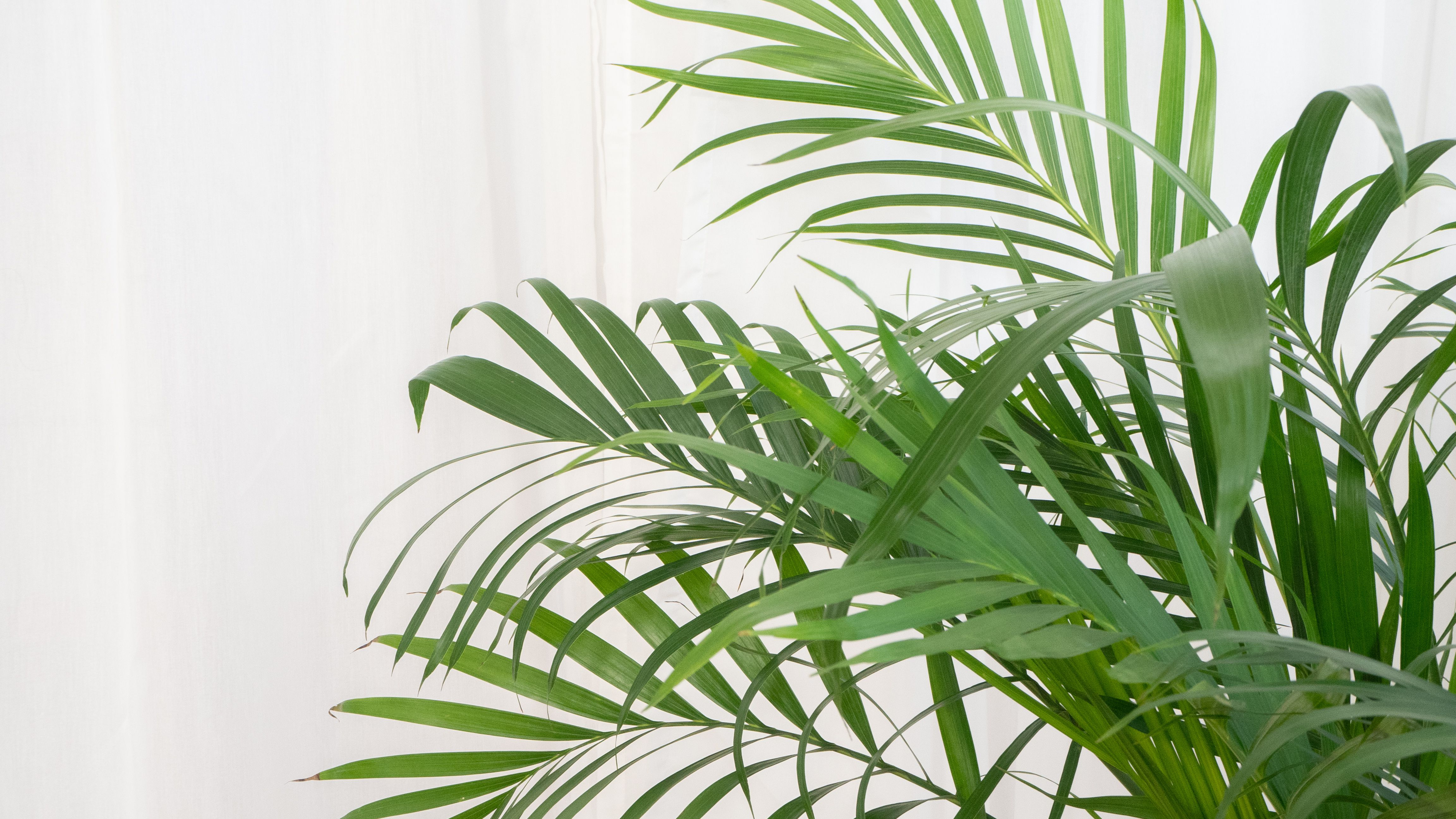 8 Types Of Palm Plants To Grow Indoors
