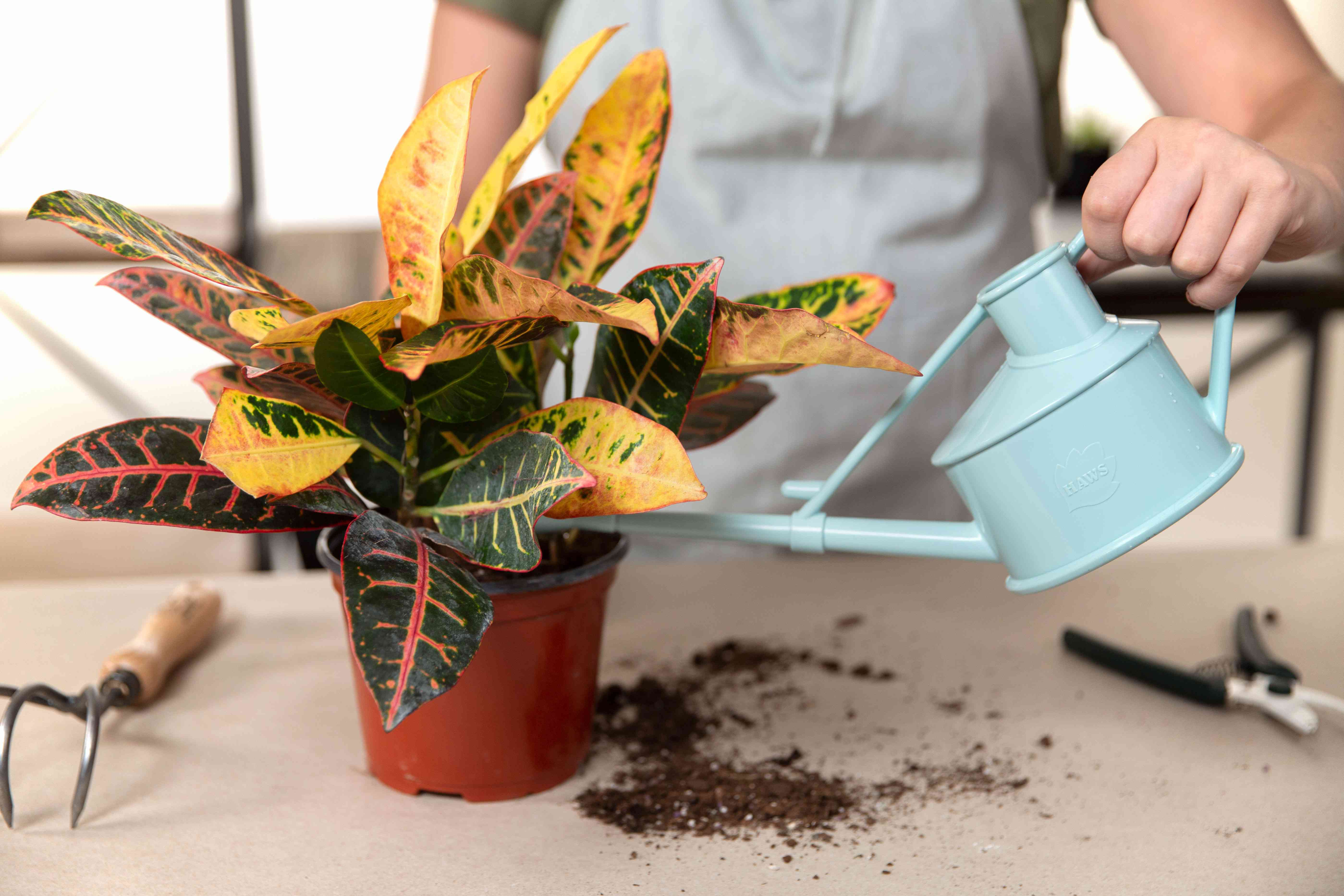 watering a newly potted plant