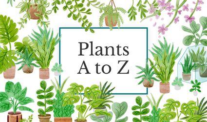 Plants A-Z Graphic