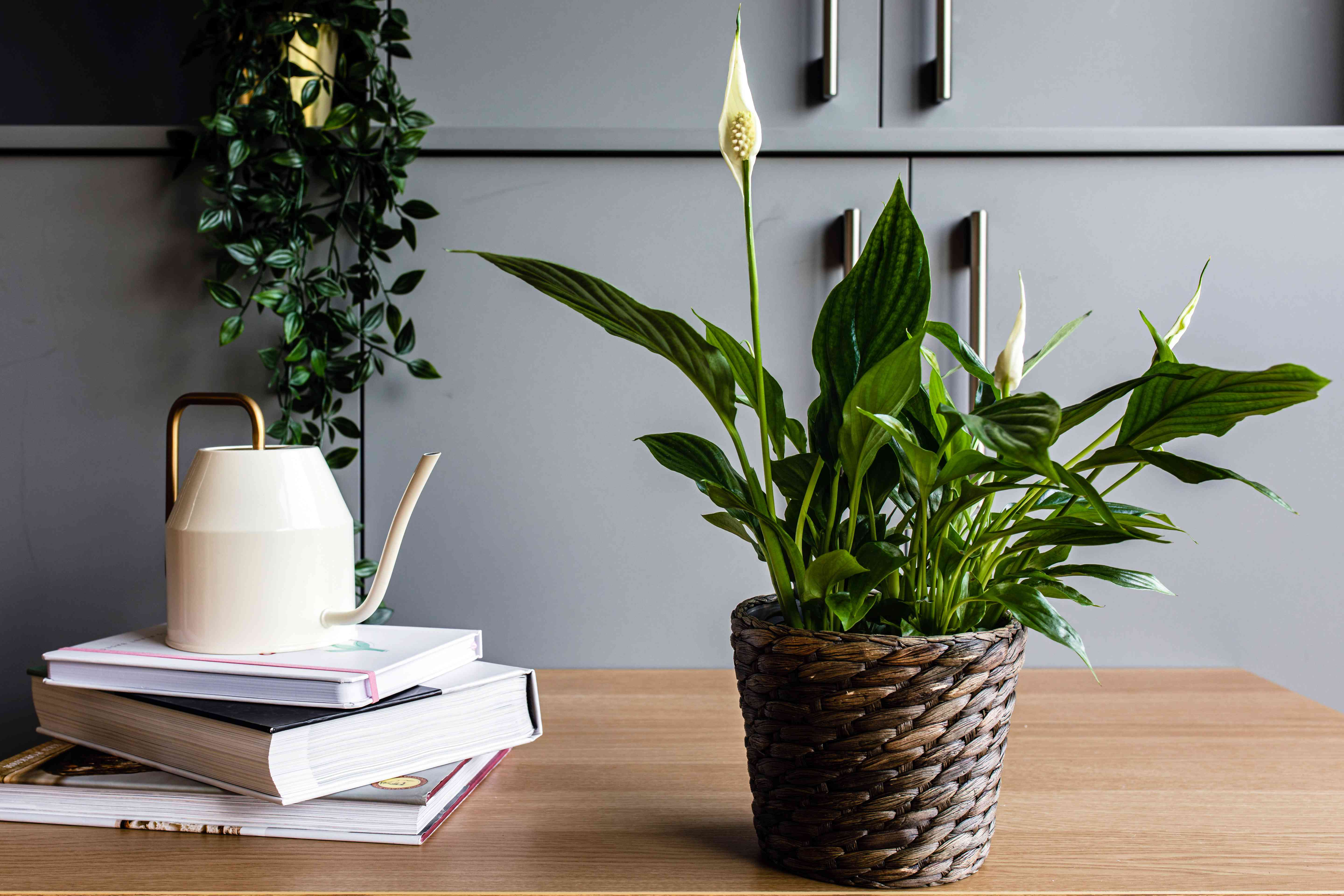 a peace lily in an apartment