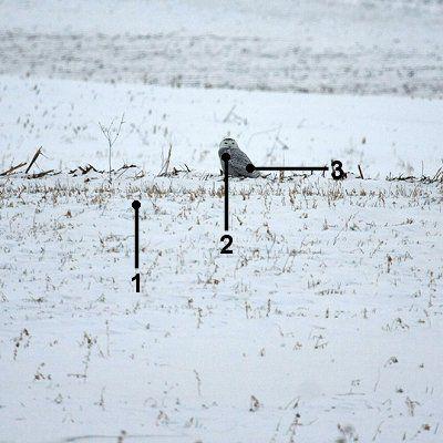 Identify a Snowy Owl at a Distance