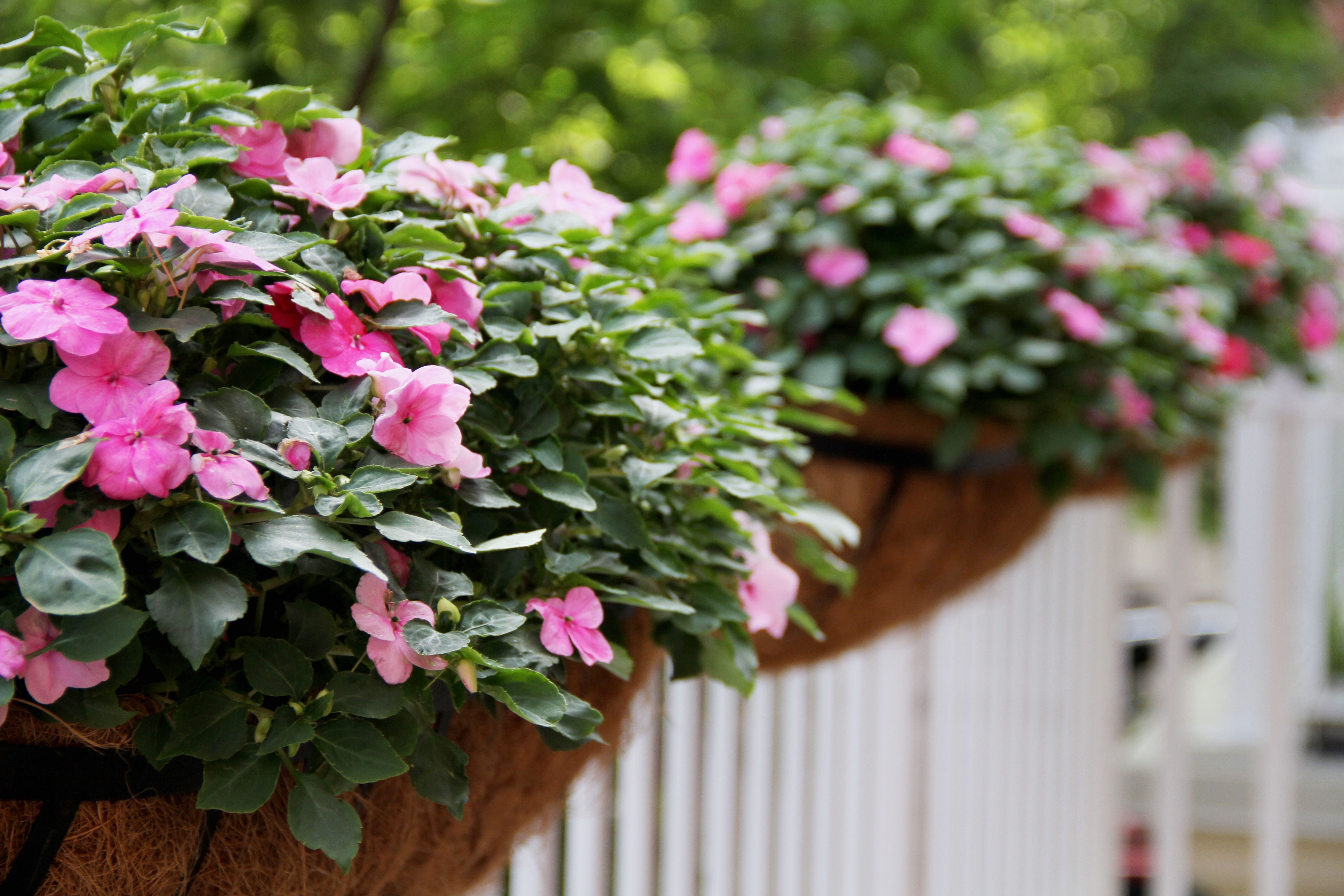 10 Easy Annual Flowers To Start From Seed