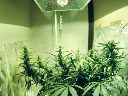 How to Remodel a Marijuana Grow House Back to Normal