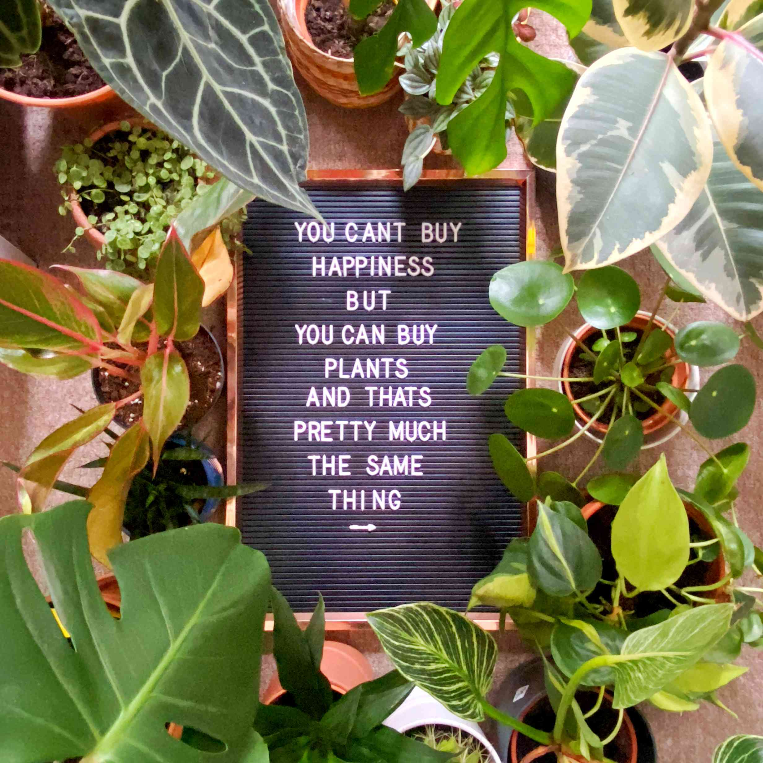 positive message about plants on board, surrounded by a beautiful collection of plants