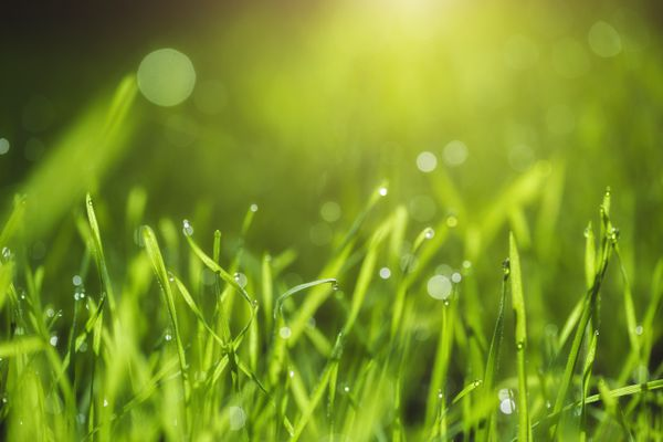 close up of grass with sunshine