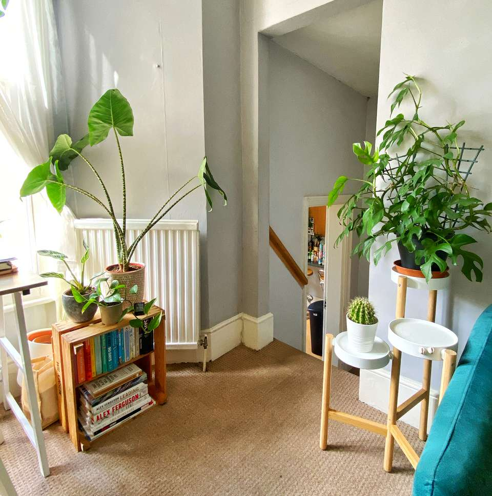 living room plants Taylor Fuller