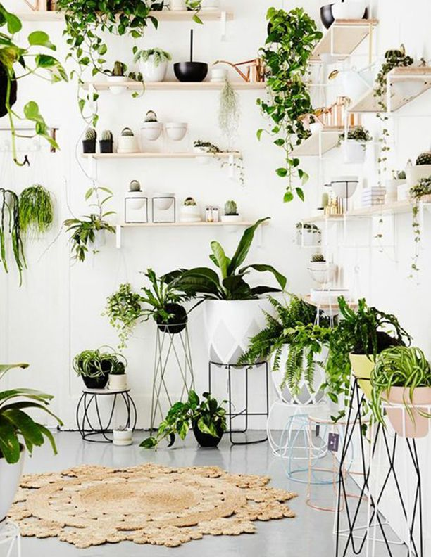 beautiful modern plant stands