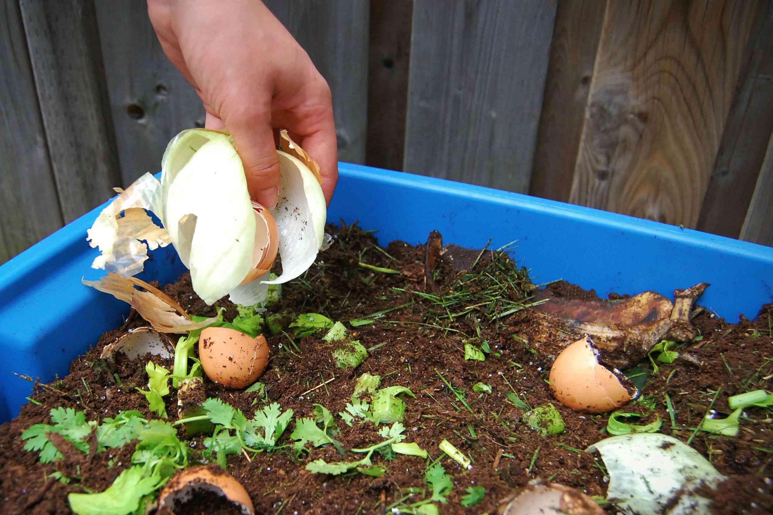 Food scraps and egg shells added to blu composting bin closeup