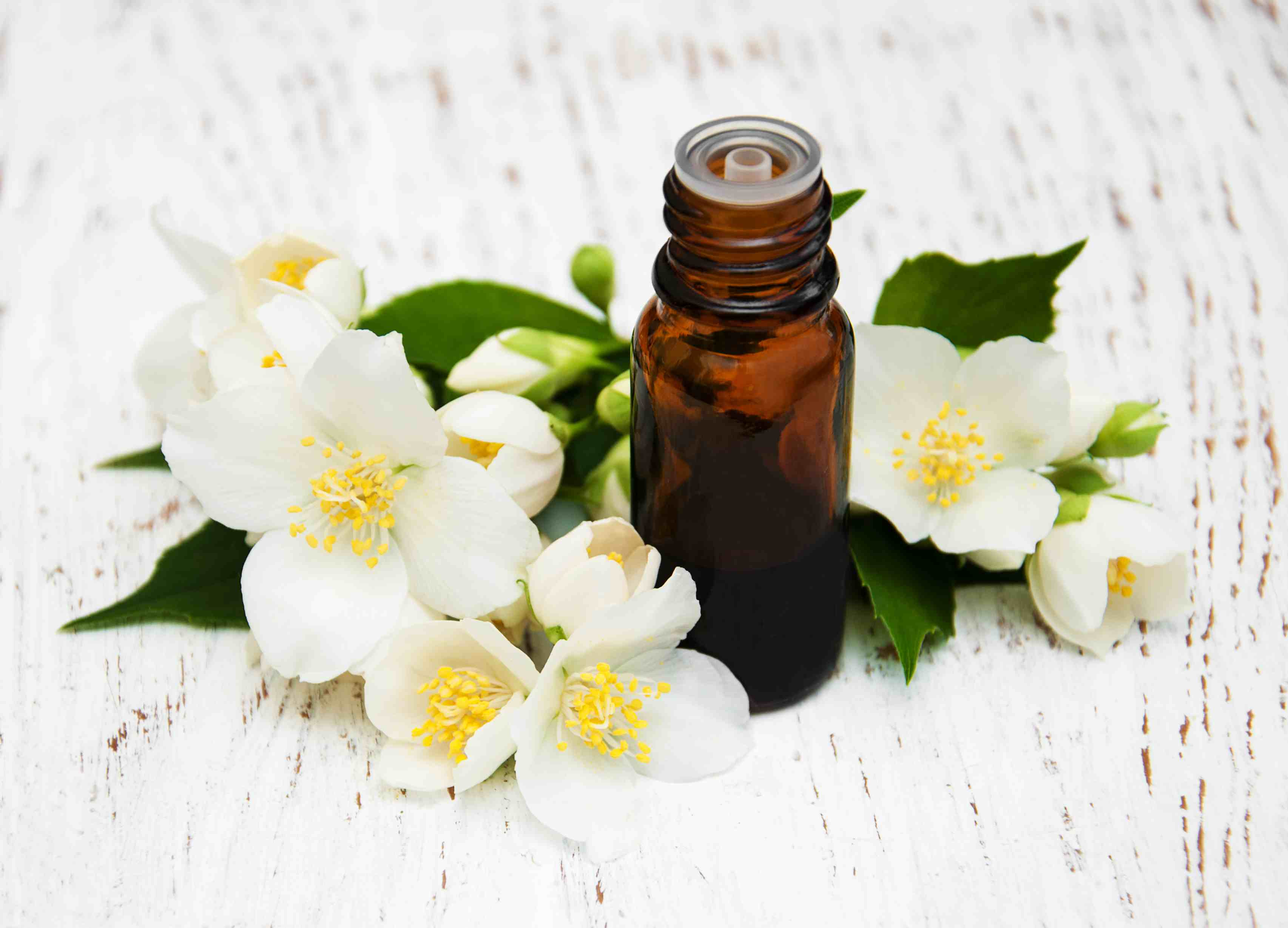 Jasmine essential oils by jasmine flowers
