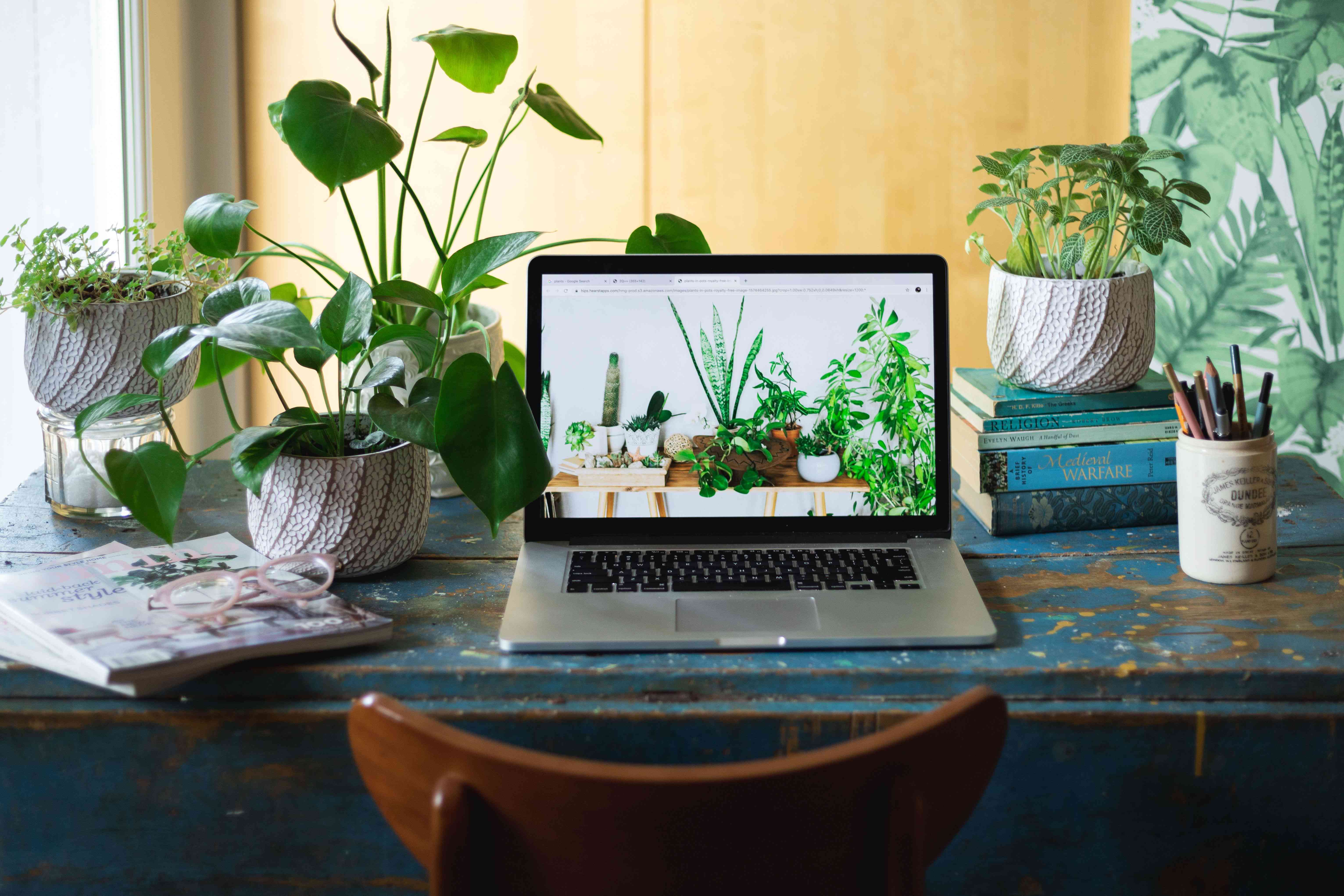Houseplants searched online with laptop on desk with plants surrounding