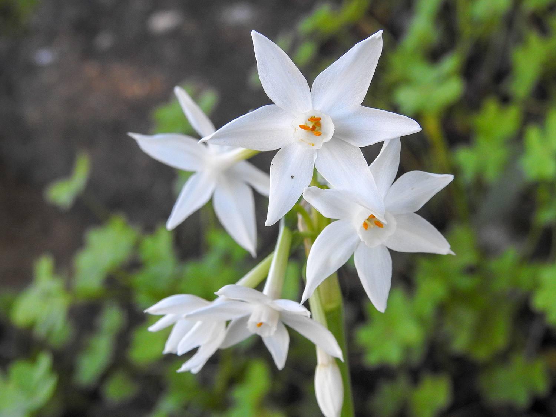 11 Deer Resistant Flower Bulbs For Your Garden