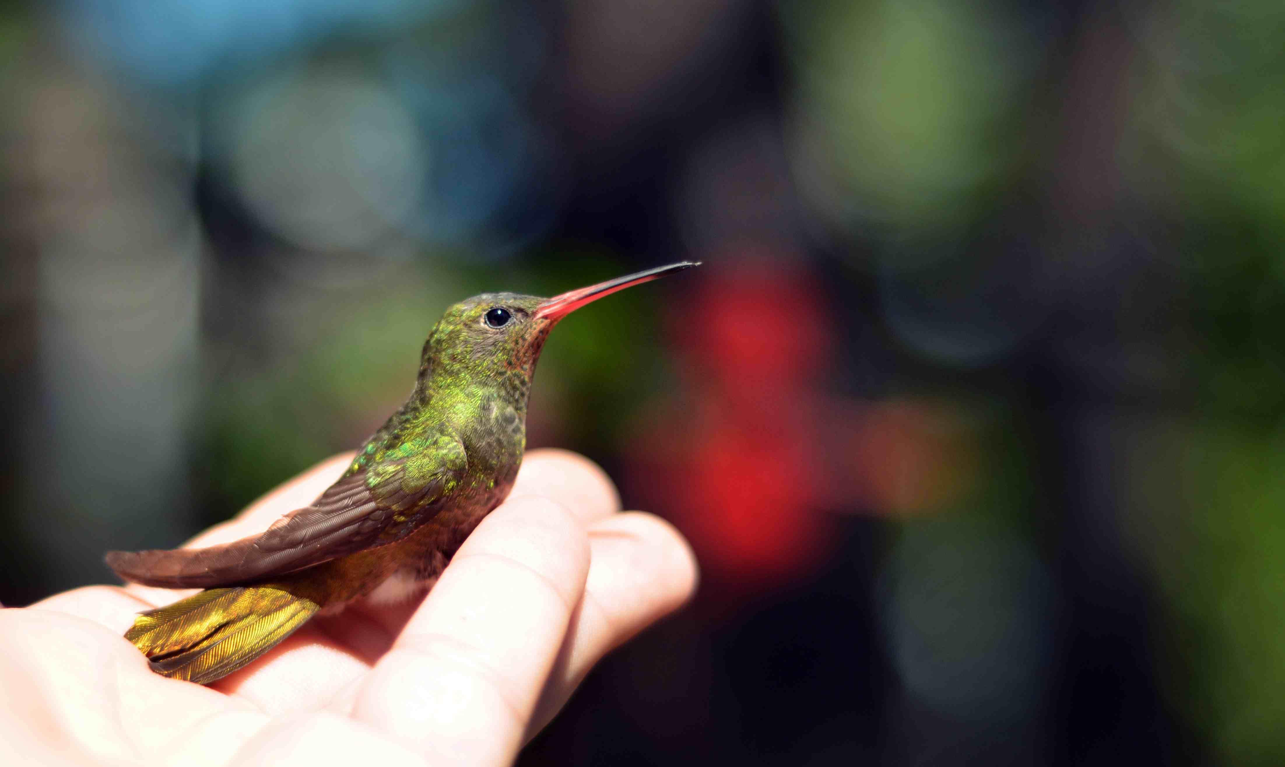 Hand holding a hummingbird