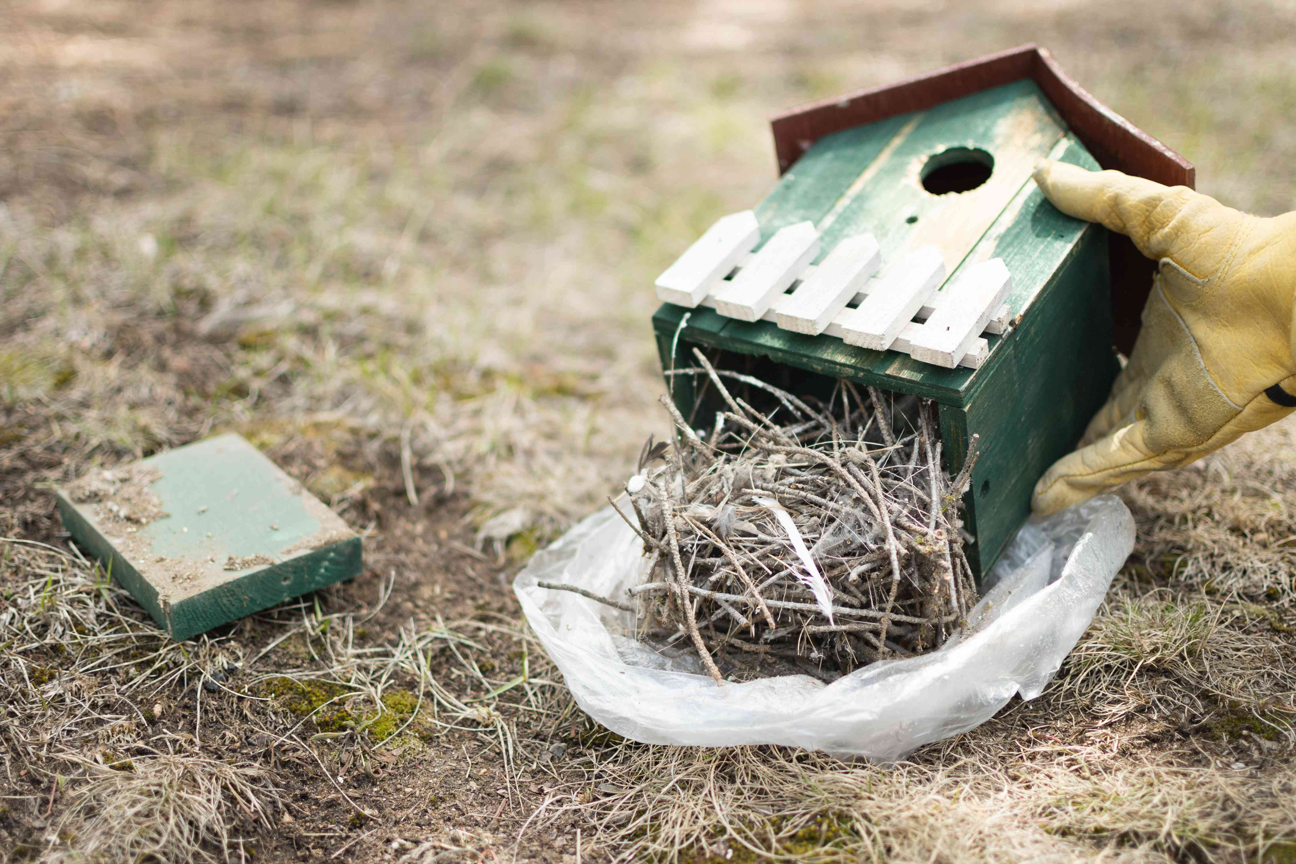 Old nesting material removed from bottom of birdhouse and placed in plastic bag