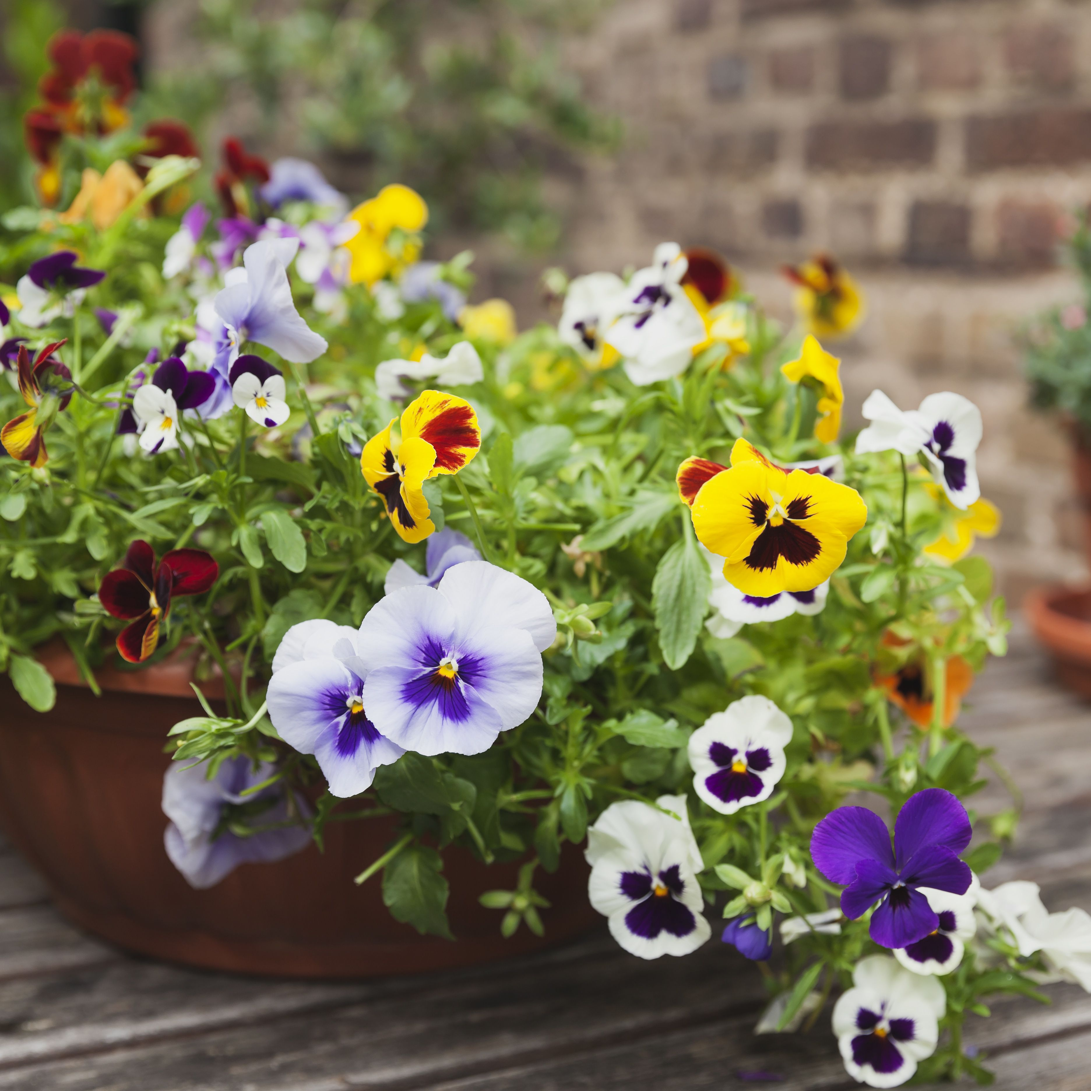 Plants For Spring Container Gardens