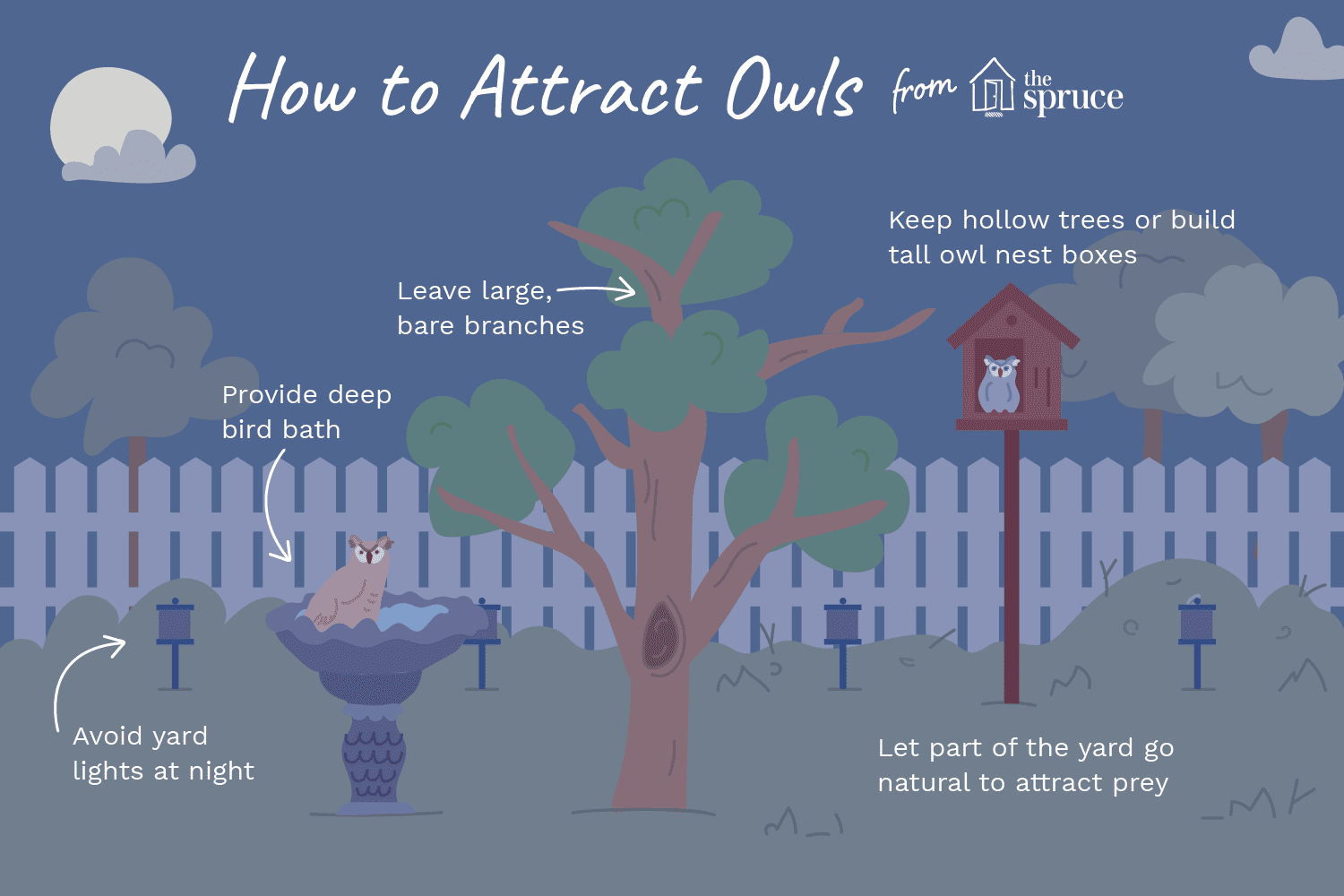 how to attract owls