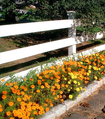Esta cerca ciertamente está vestida con la plantación hecha frente a ella