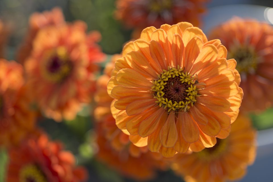 Pictures of plants with orange flowers garden photo worldgeorgianna lane getty images mightylinksfo